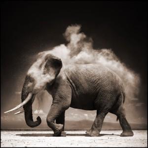elefante nick brandt