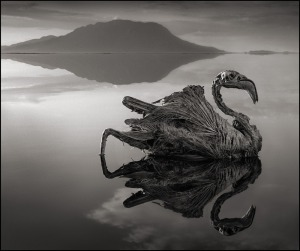 nick_brandt_calcified_flamingo